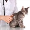 Ветеринарные клиники в Кологриве